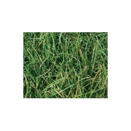Hills Quality Rye Turf per m2